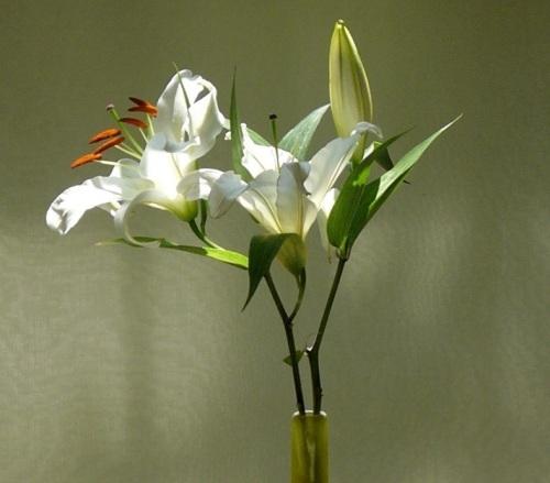 jacks-flower7.jpg
